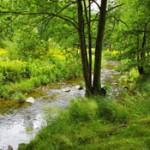 Woodland, Stream, Nature