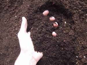 fresh-soil-1468423